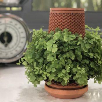 terraplanter